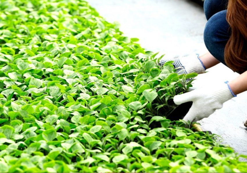 Sustainable Production, Innovation and Market