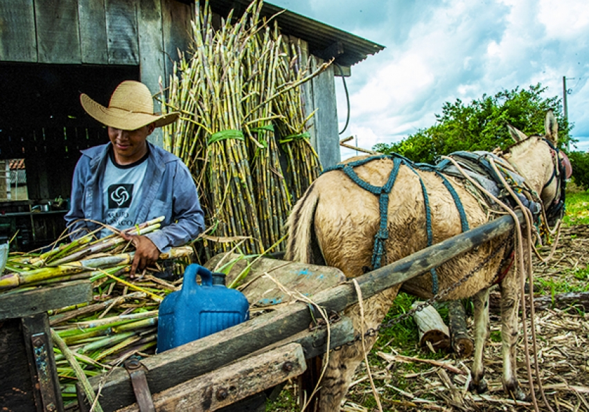 Agriculture and Traditional Peoples and Communities
